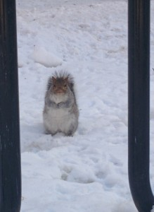 Another random squirrel at McGill University. I think he's trying to wish you Happy Holidays!