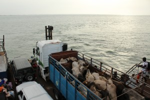 Crossing the River Gambia from Barra to Banjul